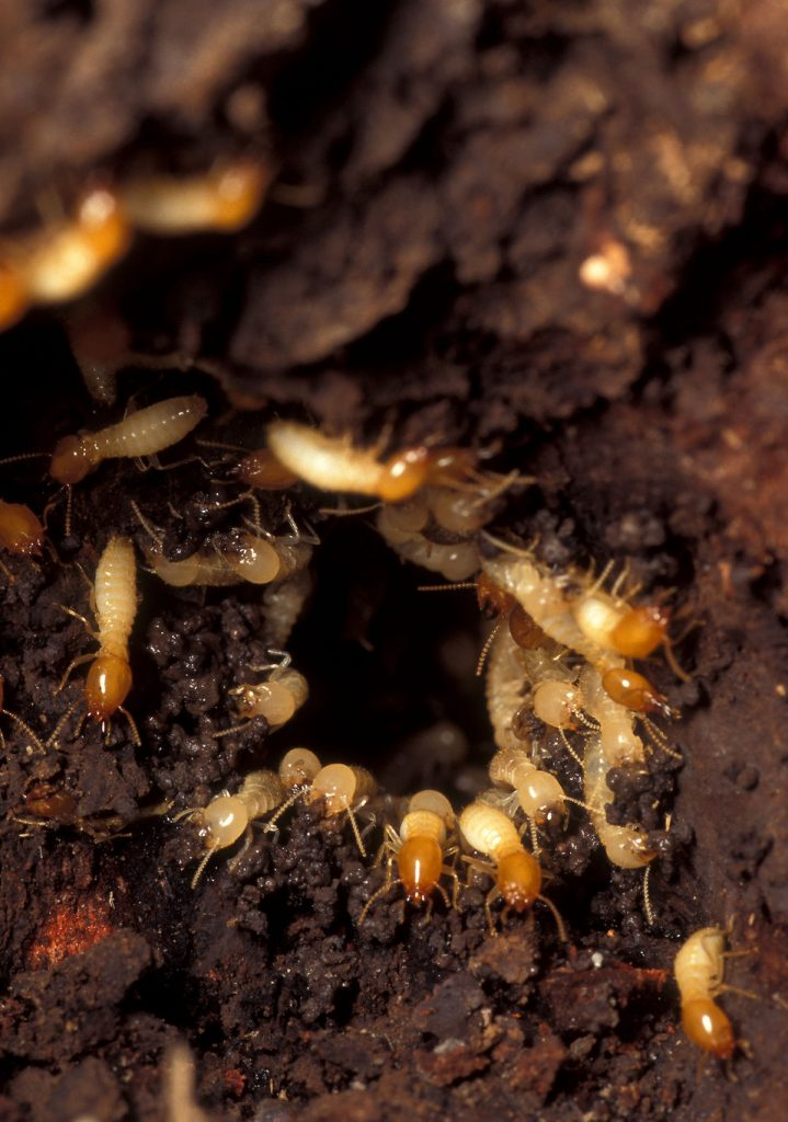 How to Inspect for Termites
