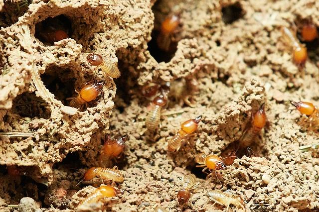 do i need a termite bond