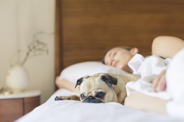 Can Bed Bugs Be Completely Eliminated?